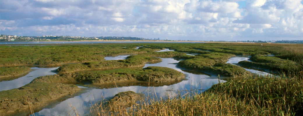 Kendall-Frost Mission Bay Marsh Preserve